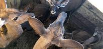 Lalibela Repopulates Game Reserve