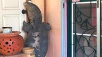 Thai man almost loses home to monster monitor lizard