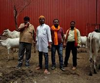 Hindu man thrashed in Ujjain on suspicion of cow slaughter; four arrested