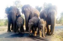 Protect Bannerghatta National Park from mining, encroachments: Online petition