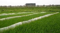 One-fifth of Chinese farmland is polluted