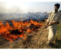 Australian institute offers technological help to prevent stubble burning