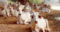 Government to geotag 10 lakh livestock farmer houses