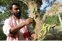 Central Govt to extend all support to develop sericulture sector in Assam