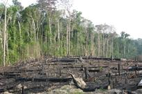 The World's Environments Are Being Destroyed Faster Than They Can Recover