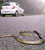 Snake and Frog lovers to make a film