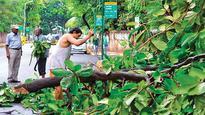 BMC plans Standard Operating Procedure for tree trimming across Mumbai