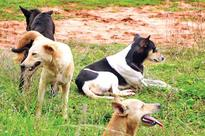 Man mauled to death by stray dog in Pulluvila