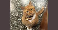 This cat has been running a store in NY for 9 years! | pix