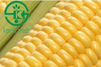Kaveri Seed advances 5%; commissions new plant at Telangana