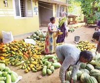 Farmers harvest 20 tonnes of vegetables at Ottapalam
