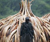 Uhuru arrives at Nairobi national park for huge ivory burning
