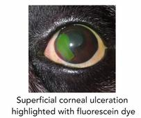 Bayer launches final video in Canine Ocular Health series