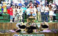 World's only surviving panda triplet celebrates second birthday