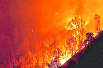 Forest fire fright in reputable school