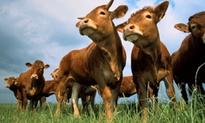 Beef issues on the table at International Beef Alliance