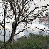 Non-forestry purposes decreasing Maharashtra forest cover: Report