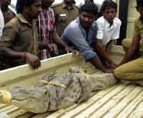 Crocodile resuced and taken to Vandalur Zoo