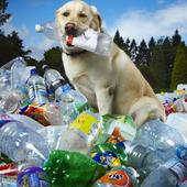 Tubby, world's 'greenest dog' who sniffed out 26,000 plastic bottles dies in UK