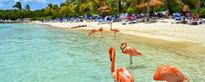 Last minute non-stop from New York to Aruba or Sint Maarten from $203!