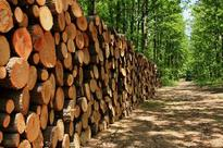 Root and branch challenges for forestry sector