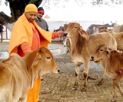 Aadhar for cows to check smuggling, Centre tells SC