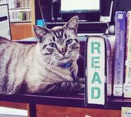 Browser The Cat Allowed To Stay At Texas Library