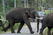 Honeybees to 'tame' wild elephants in Chhattisgarh