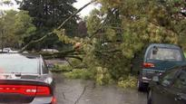 Typhoon-fuelled storm prompts ferry cancellations, Stanley Park closure