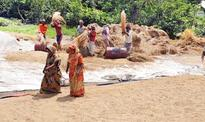 Govt to allow pvt sector to export coarse rice: Tofail