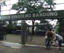 BANDUNG ZOO, INDONESIA  OIPA ASKS TO THE GOVERNMENT to enforce its own standards for zoo licencing  SIGN THE PETITION!