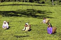 Workers lynch tea garden owner in West Bengal