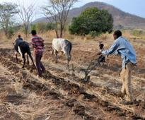 Mansa farmers in need of help