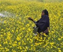 Centre allays concerns of anti-GM groups over composition of a key panel
