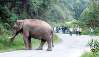 Wild elephant steps into middle of road in Munnar, traffic interrupted