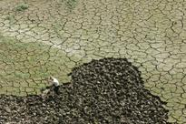Pleas by officials to switch to oilseeds, pulses from rice ignored by farmers