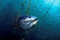 Sindh govt lauded for legislation on conservation of marine resources