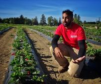 Middle of May becoming B.C.'s new strawberry season