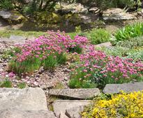 Steps To Make A Rock Garden In Your Apartment