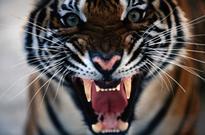 Fighting Wildlife Crime: Communities Work to Turn Away Poachers (Video)
