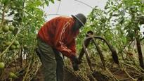 Mobile drought insurance for Africa's farmers