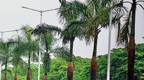 BMC plans to plant 15,000 trees this monsoon