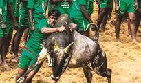 Supreme Court rejects plea for judgement on Jallikattu