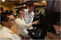 Researchers Study How Star-Shaped Brain Cells Modulate Glutamate Transmission