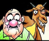 High court allows sacrificial goats inside Naina Devi temple