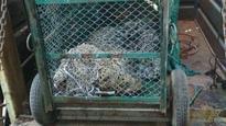 Watch: CCTV footage of leopard that strayed into Maruti Suzuki plant in Haryana's Manesar