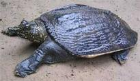 Turtle conservation project gets under way