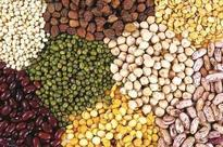 Seeds at affordable rates to farmers: HSDC on losses