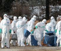 Japan avian flu: Weeks after culling, slaughtering of 2 lakh birds begins