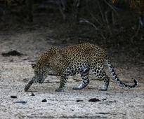 Bangalore leopard scare forces closure of over 100 schools